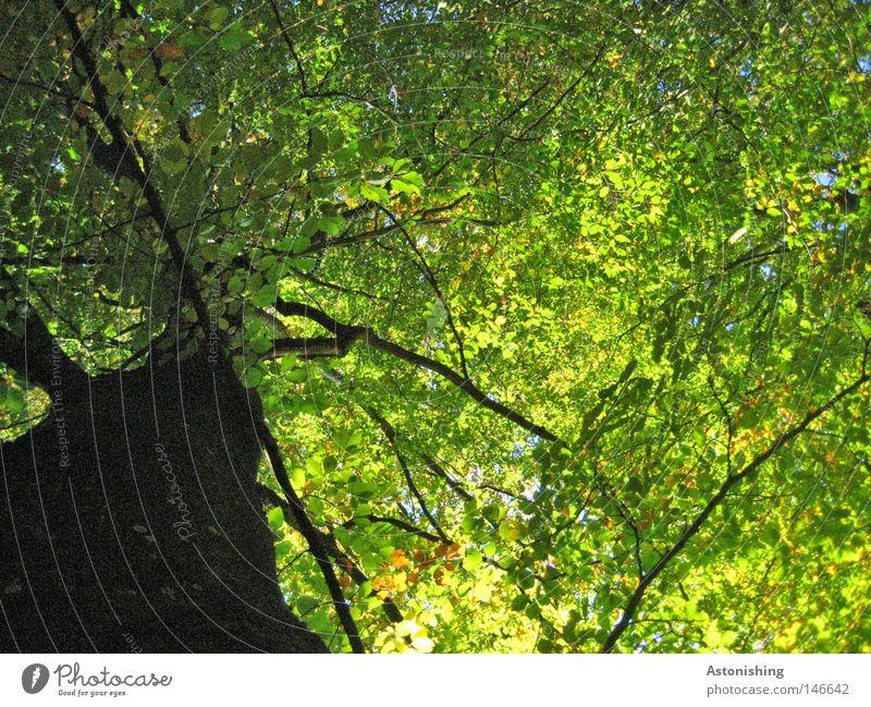 Nature Tree Green Summer Leaf Dark Warmth Large Perspective Growth Illuminate Tree trunk Treetop Branchage Tree bark Size