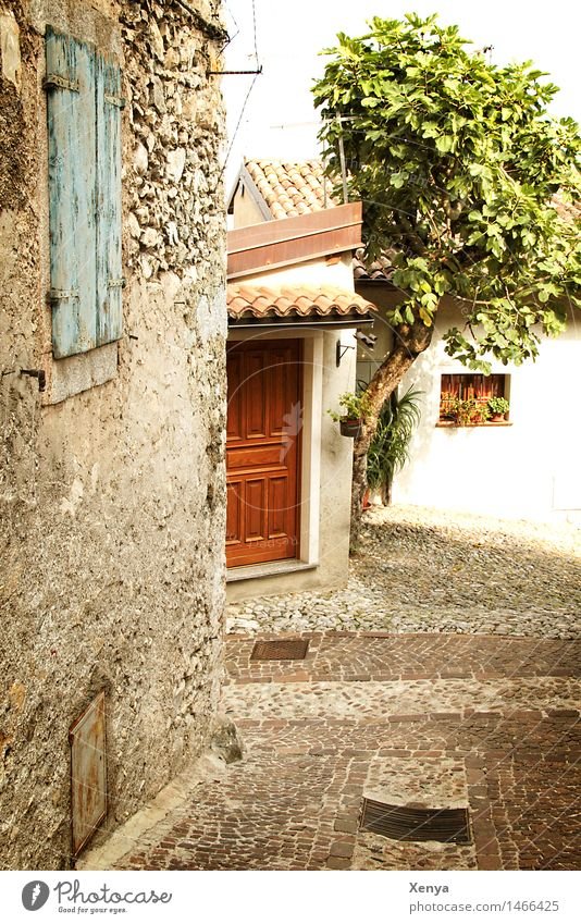 Street in Limone Tree Village House (Residential Structure) Wall (barrier) Wall (building) Door Stone Brown Green Nostalgia Picturesque Vacation photo