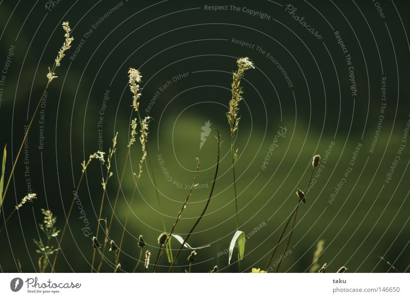 Green Autumn Meadow Grass Trip Delicate Blade of grass Smooth Kite Sunday