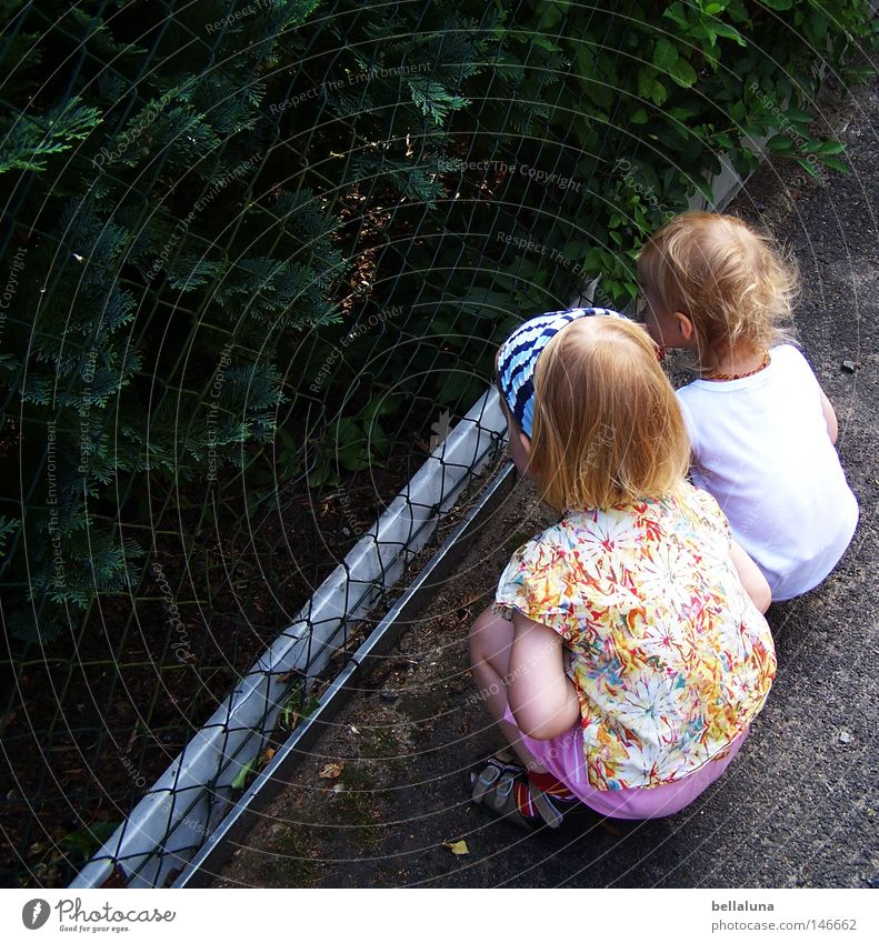 Child Tree Street Friendship Planning Bushes Observe Curiosity Toddler Fence Vantage point Crouch Wire netting fence