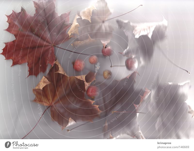 Nature Beautiful White Red Joy Calm Leaf Loneliness Cold Snow Autumn Sadness Brown Grief Esthetic Authentic