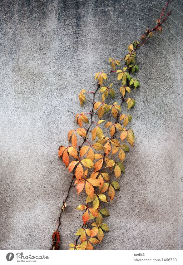 autumn branch Environment Nature Autumn Twig Leaf Autumn leaves Autumnal colours Wall (barrier) Wall (building) Faded To dry up Growth Thin Authentic Together