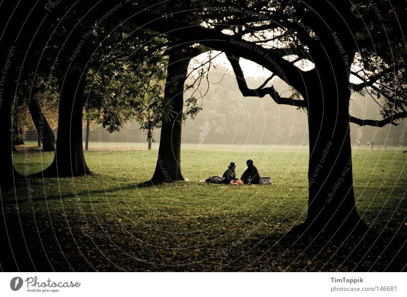 Nature Tree Leaf Loneliness Forest Relaxation Autumn To talk Garden Sadness Think Moody Park Couple Together Fog