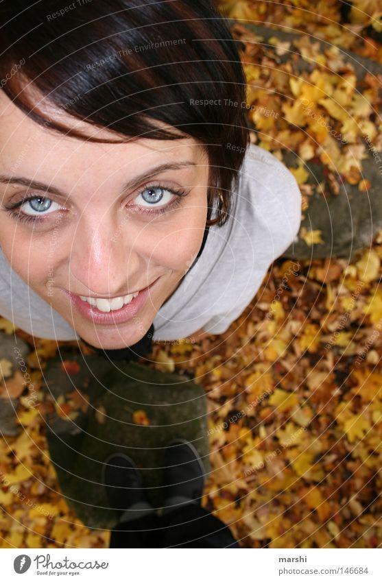 Blue Joy Leaf Eyes Autumn Above Friendship Perspective Under Autumnal Puppy love