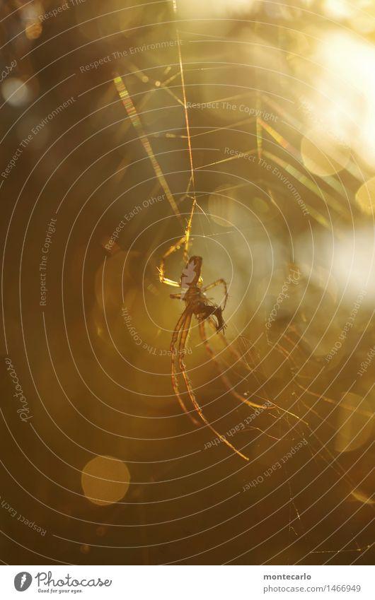 please don't disturb... Environment Nature Animal Farm animal Wild animal Spider 1 Spider's web Esthetic Thin Authentic Elegant Uniqueness Small Astute Near