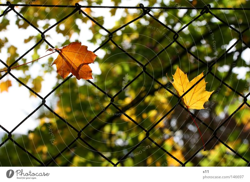The Autumn Catch Seasons Cute Yellow Green Light Physics Tepid Capture Hang Fence Garden fence Tree Leaf Photosynthesis Edge of the forest To console Plant Park