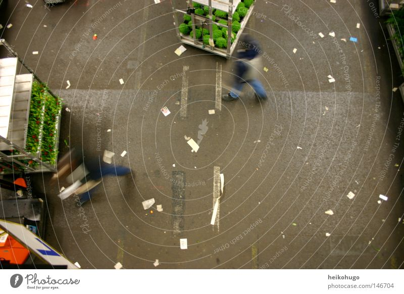 Aals Sea Flower Trade Auction Hall Floor covering Human being Bird's-eye view Netherlands Work and employment
