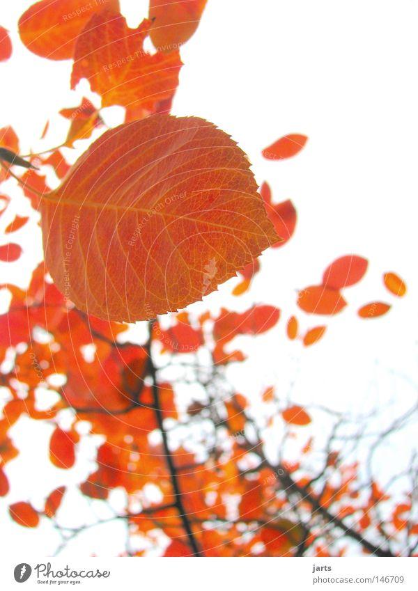 gold leaf Leaf Tree Autumn Wind Autumn wind Gold Sky jarts