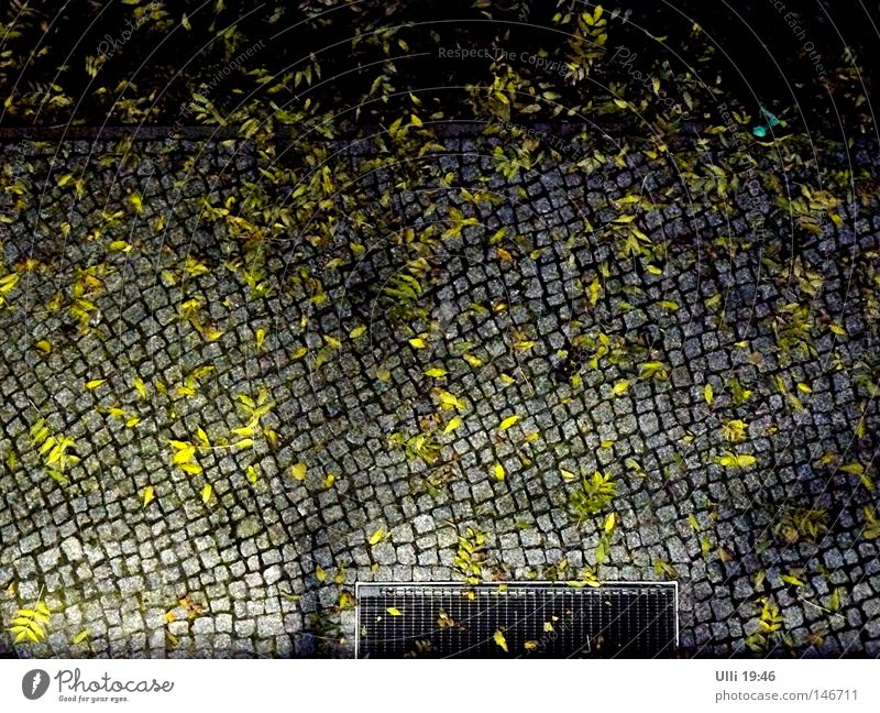 Leaf Calm Dark Street Autumn Lanes & trails Stone Background picture Weather Empty Gloomy Footpath Sidewalk Traffic infrastructure Cobblestones Pavement