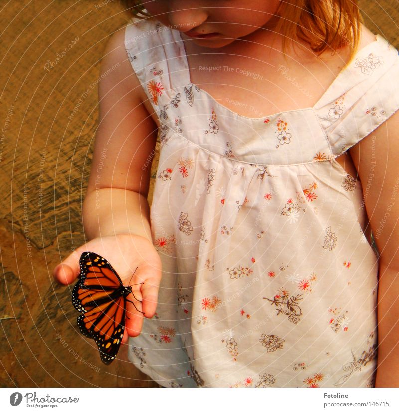 Fly little butterfly - or a little girl very carefully holds a little butterfly resting on her Colour photo Interior shot Day Artificial light