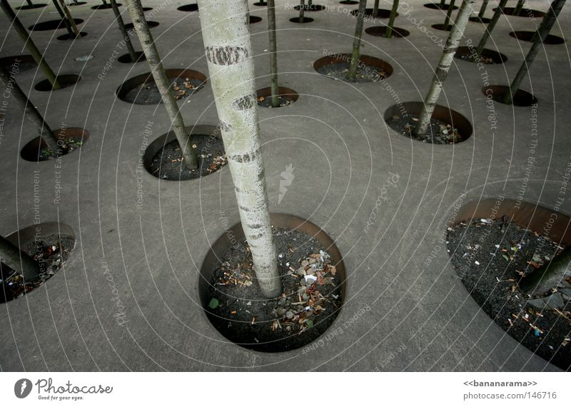 Every tree its own habitat Tree Forest Hollow Round Birch tree Concrete Art Flowerpot Winterthur Trash container Cigarette Gravel Plate with holes Design