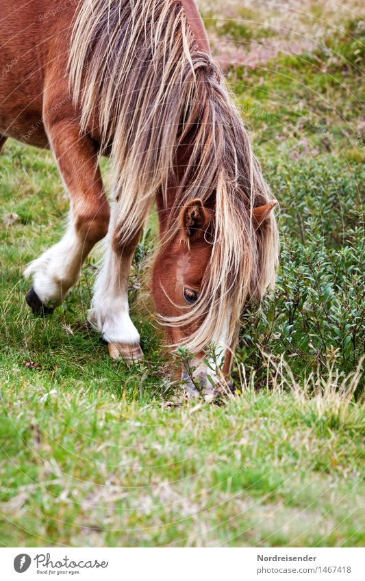 Nature Summer Calm Animal Life Meadow Grass Leisure and hobbies Elegant Friendliness Agriculture Horse Serene Pasture To feed Forestry