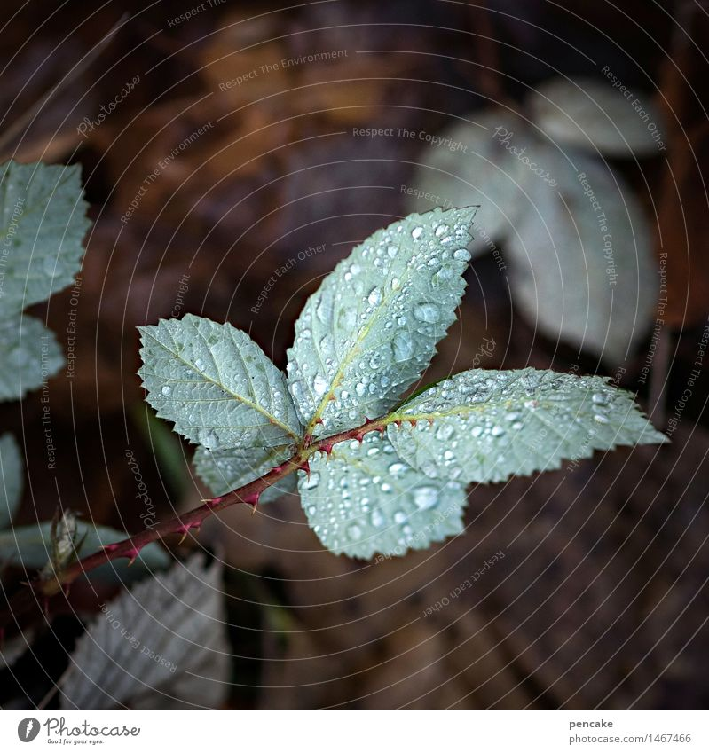 tau, look, who Nature Plant Elements Earth Drops of water Autumn Winter Leaf Forest Sign Damp Blackberry leaf Dew Blue-green Thorn Wet Colour photo