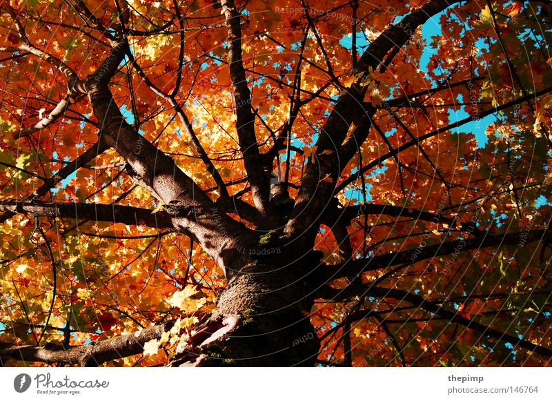 Tree Green Blue Red Leaf Yellow Autumn Death Wood Brown Branch Transience Seasons Tree bark Branchage Wood grain
