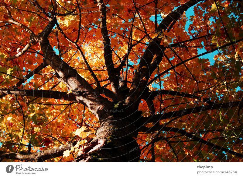 Tree Green Blue Red Leaf Yellow Autumn Death Wood Brown Branch Transience Seasons Tree bark Branchage Wood grain