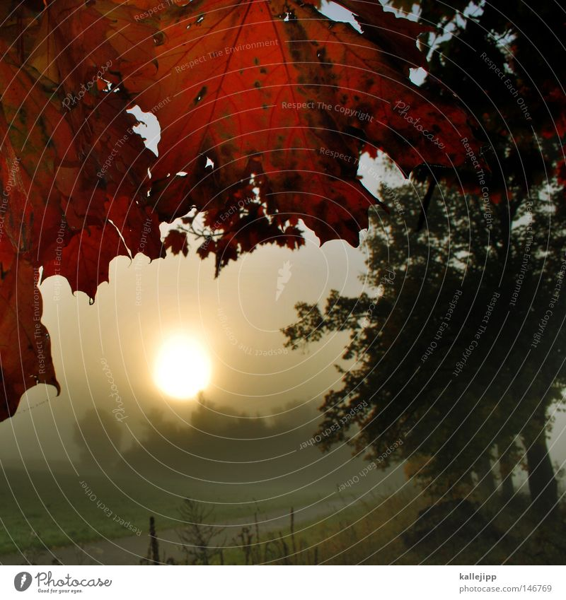 Nature Tree Sun Plant Red Leaf Autumn Meadow Lanes & trails Moody Earth Field Stars Fog Earth Growth