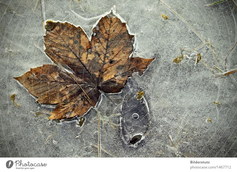 Nature Beautiful Leaf Winter Cold Autumn Gray Art Exceptional Brown Ice Esthetic Fantastic Uniqueness Frost Fish