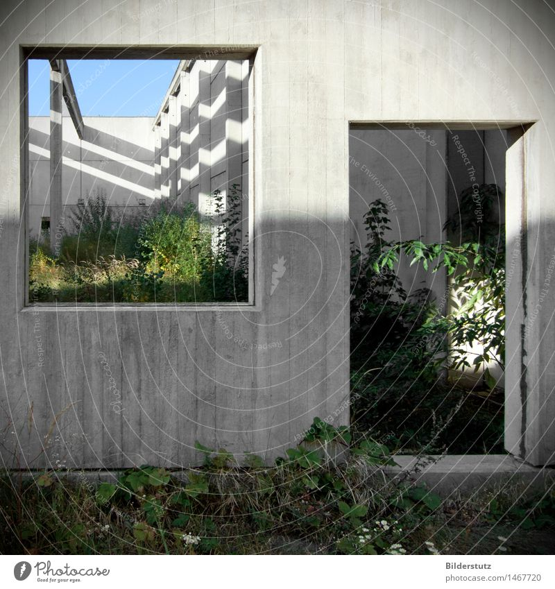 Nature Plant Green Loneliness Calm Wall (building) Architecture Interior design Natural Building Wall (barrier) Gray Art Garden Exceptional Dream
