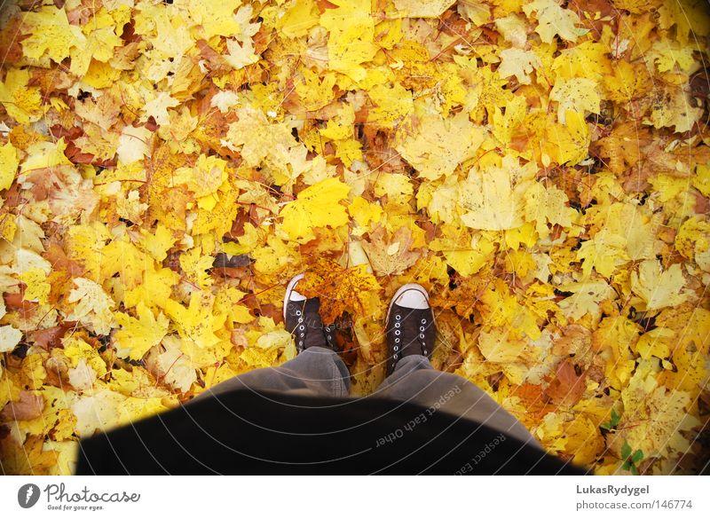 Yellow Sea Leaf Autumn Top Shows Footwear Pants Brown Chucks Cold Wet Wind Seasons bottom leaves legs Feet Floor covering