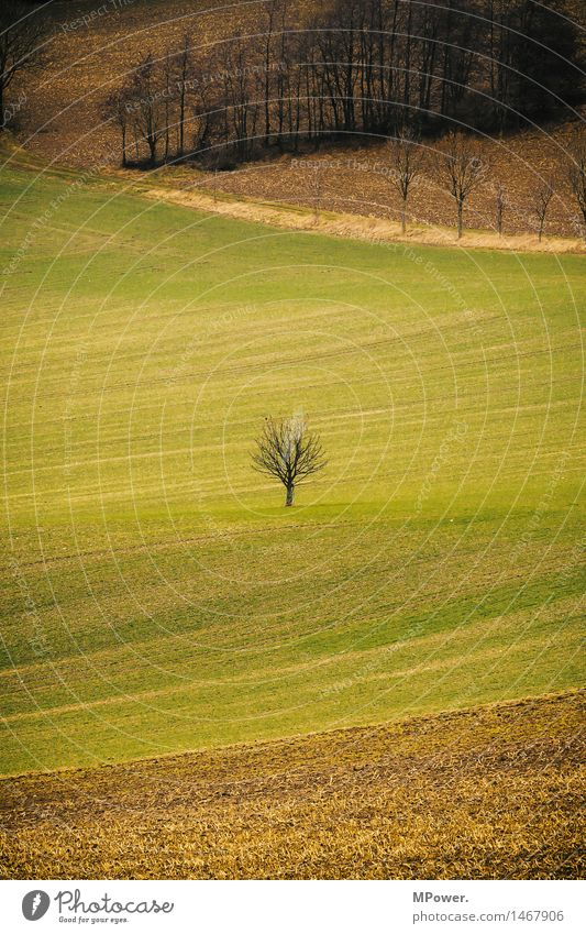 Tree Environment Autumn Small Field Individual Agriculture Environmental protection Sparse Margin of a field