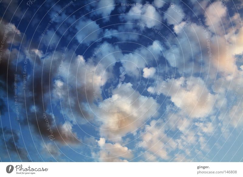 Sky Blue White Clouds Dark Above Gray Bright Pink Tall Copy Space Dusk Upward Height Flake Clouds in the sky
