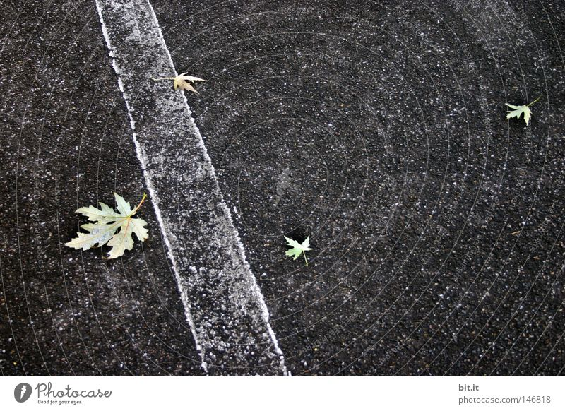THREE TO ONE. Leaf Gray Gray scale value White Autumn Gloomy Stripe Line Asphalt Traffic infrastructure Street