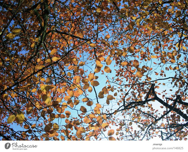 disarrangement Round Oval Leaf Tree Limp Autumn Branchage Plant Colouring Muddled Transience Blue Twig Nature Orange Sky leaf blanket