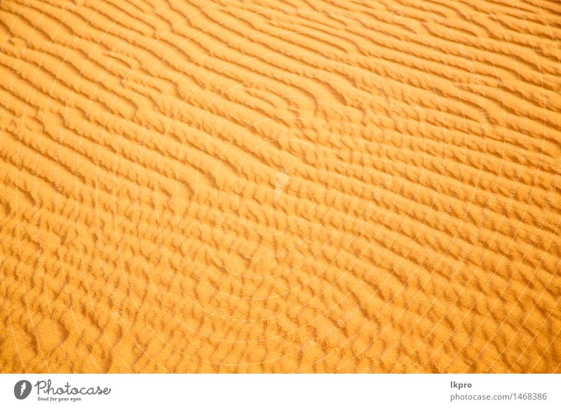 in the sahara morocco desert Nature Vacation & Travel Beautiful Landscape Loneliness Yellow Brown Sand Idyll Beautiful weather Hill Hot Africa Dune