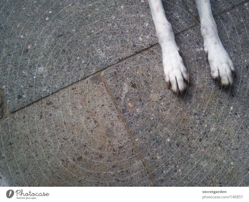 Dog City White Relaxation Loneliness Animal Street Sadness Gray Feet Above Together Lie 2 Contentment Arrangement