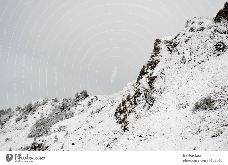 Above the snowline Leisure and hobbies Hiking Nature Landscape Elements Earth Sky Climate Snow Tree Rock Alps Mountain Allgäu Alps Snowcapped peak Tall Cold