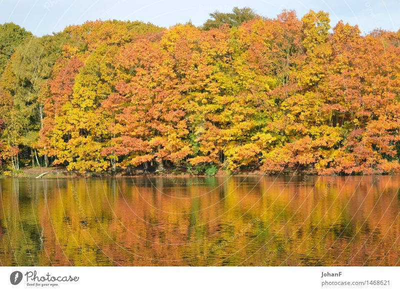 Autumn colors water reflection Nature Landscape Water Tree Forest Lakeside Brown Multicoloured Yellow Gold Green Orange Colour photo Exterior shot Morning