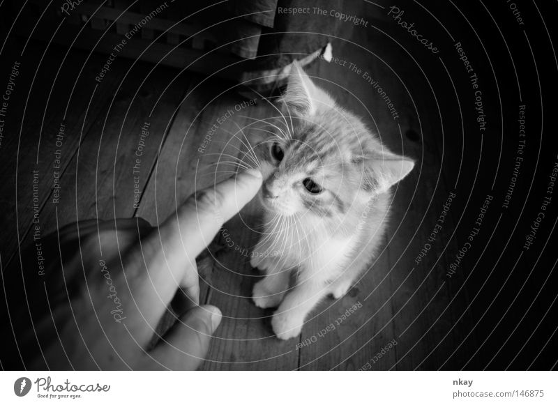 Poke the Cat Black & white photo Jostle Pet Domestic cat Mammal black Nikkor lenses