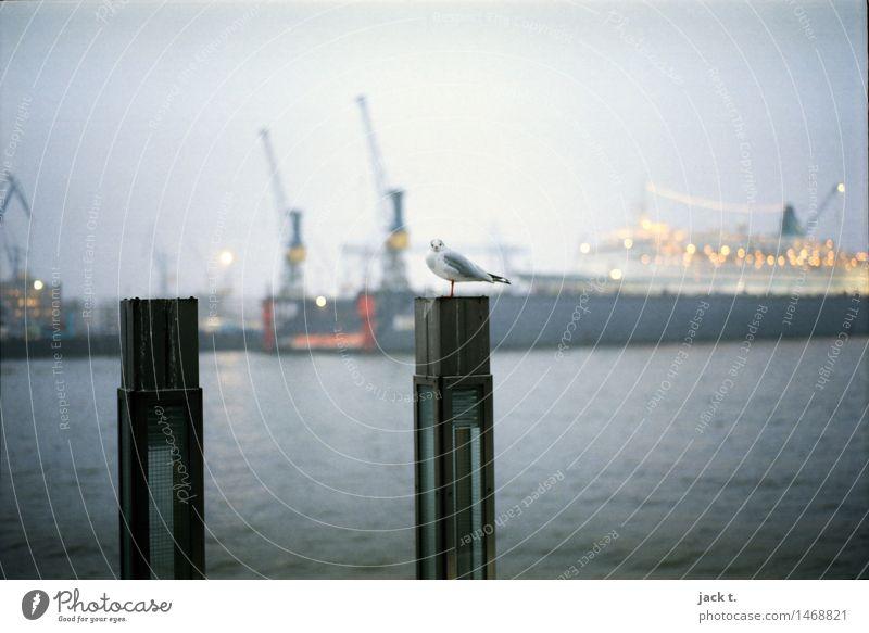 Water Calm Bird Fog Harbour Port City