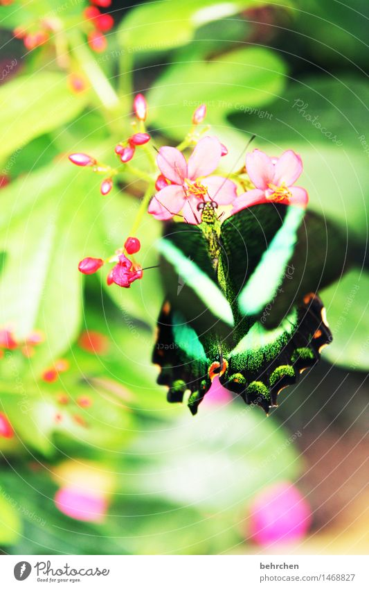 green on green Nature Plant Animal Spring Summer Flower Leaf Blossom Garden Park Meadow Wild animal Butterfly Animal face Wing Compound eye 1 Observe Blossoming
