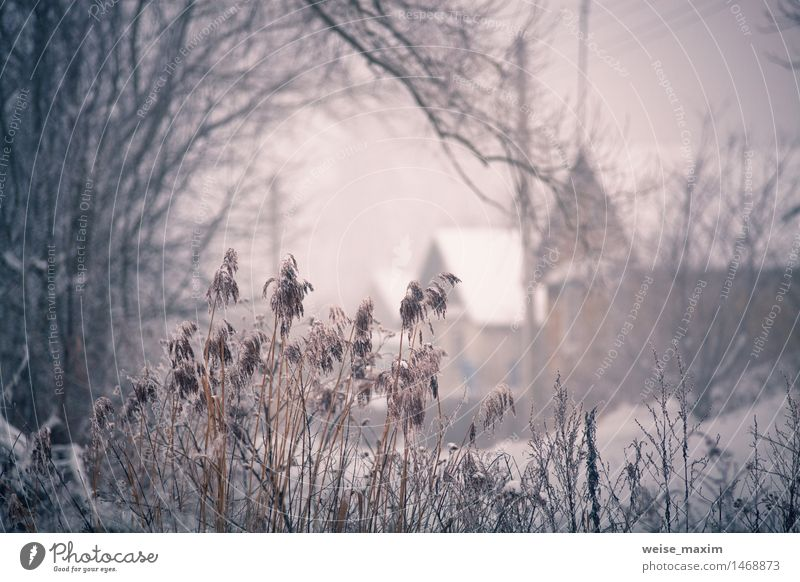 Snow and winter. Belarus village, countryside in winter Vacation & Travel Tourism Winter House (Residential Structure) Nature Landscape Plant Fog Tree Grass