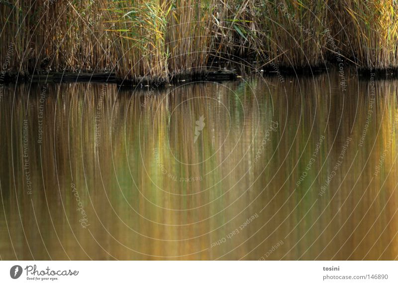 Blurred Green Water Pond Lake Blade of grass Grass Common Reed Reflection Unclear Yellow Wet Dirty Dreary Lakeside River bank Americas tosini