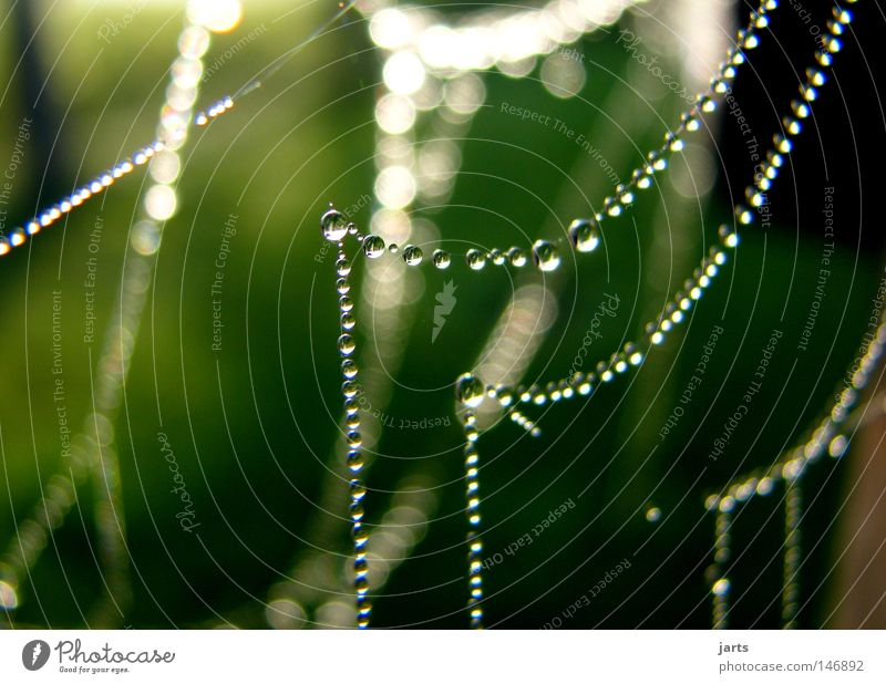 evening dress Drops of water Dew Autumn Indian Summer Spider's web Sun Chain Jewellery Pearl necklace Beautiful Net jarts