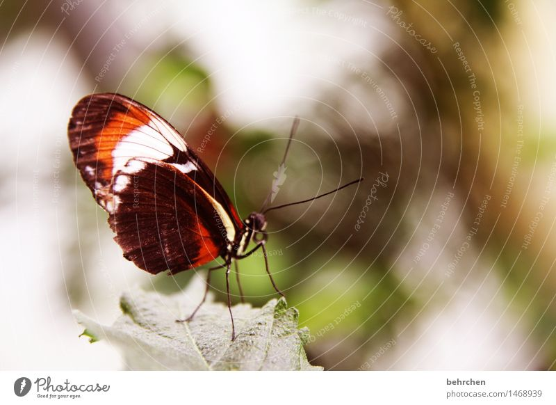 temporise Nature Plant Animal Spring Summer Beautiful weather Tree Bushes Leaf Garden Park Meadow Wild animal Butterfly Wing 1 Observe Relaxation Flying To feed