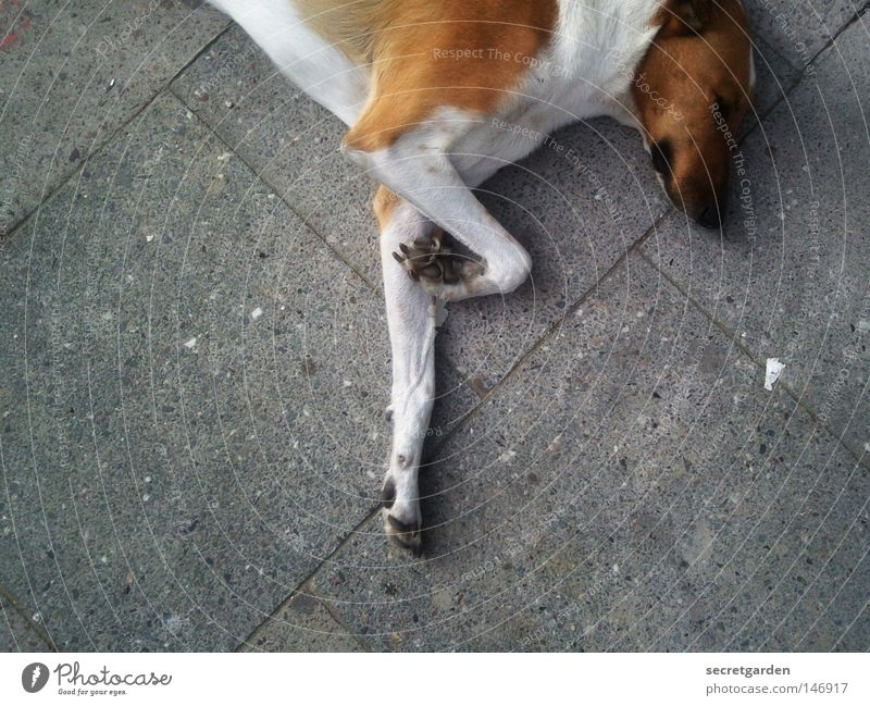 Dog City White Relaxation Loneliness Animal Street Sadness Gray Brown Feet Above Together Lie 2 Contentment