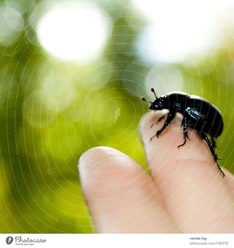 Oh, shit! Beetle Bow Insect Crawl Fear Near Love of animals Animal Nature Environment Rescue Hand Fingers Human being Black Feeler Touch Animal protection