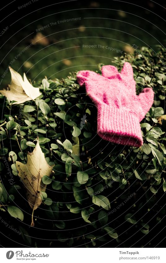 Leaf Cold Autumn Garden Park Warmth Glittering Pink Clothing To go for a walk Physics Doomed Hedge Gloves Find Lose