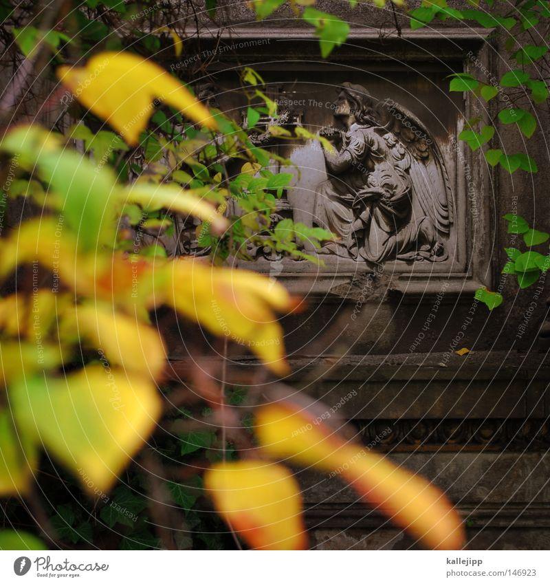 Tree Leaf Yellow Life Autumn Death Stone Religion and faith Grief Angel Church Decline Distress Prayer Depth of field Belief