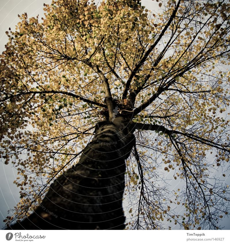 my friend, the tree Tree Tree trunk Branchage Twigs and branches Leaf Autumn Seasons Nature Environment Ecological Environmental protection Forest