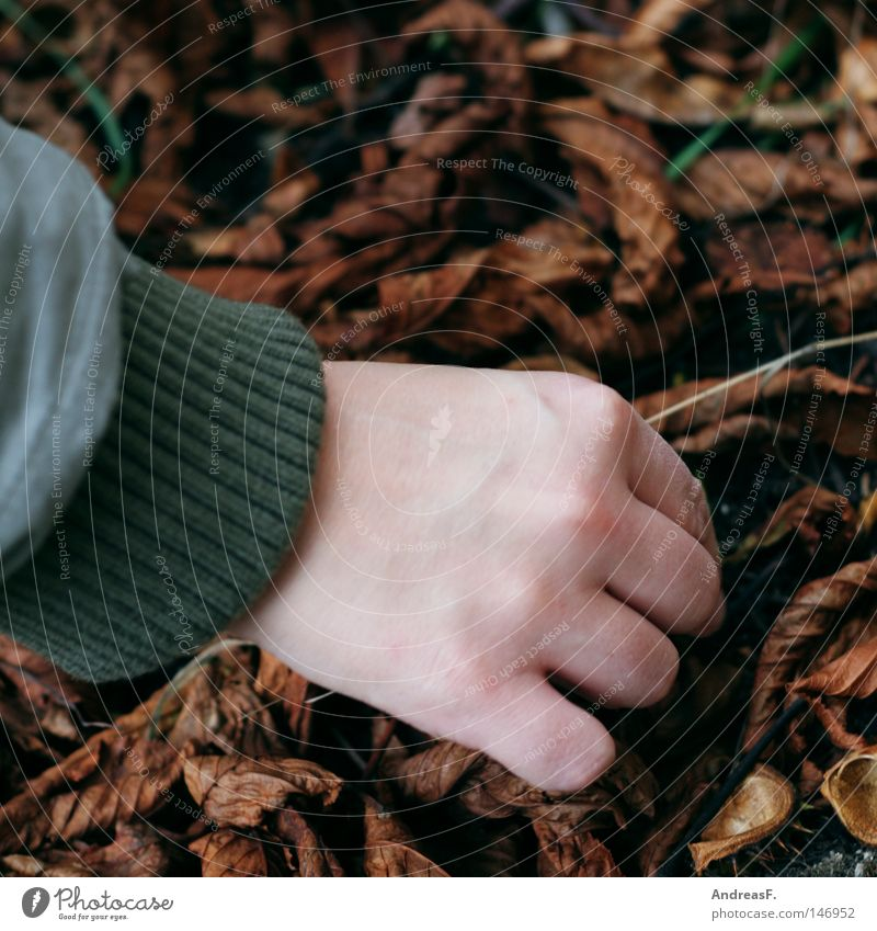Chestnuts collect I Chestnut tree Leaf Chestnut leaf Collection Lift Eliminate Hand Autumn Floor covering Ground Search Fingers Jacket Comfortless