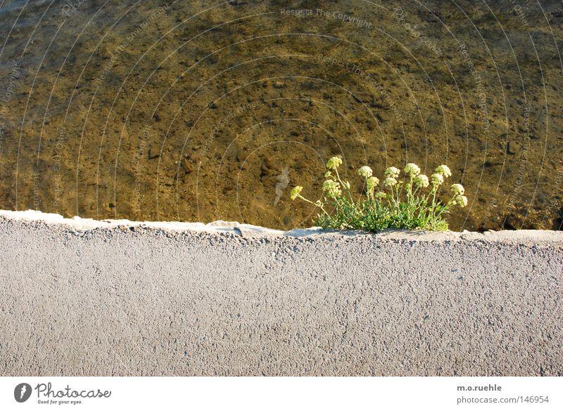 Water Flower Plant Summer Blossom Power Concrete Force Bushes Edge Column