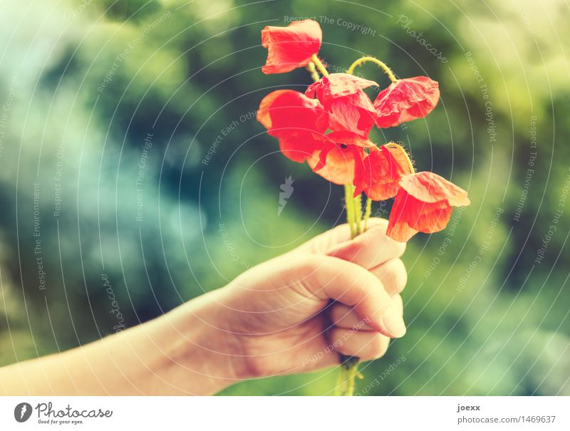 Take this! Feminine Arm Hand Summer Flower Corn poppy Crazy Beautiful Green Red Reluctance Guilty Remorse Frustration Embitterment Aggression Limp