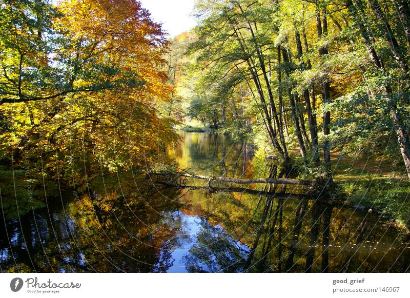 pure nature Autumn Light Reflection Tree Multicoloured Leaf Flow Calm Cut down River Brook Water Tree trunk Lanes & trails Nature Shadow Idyll toppled over