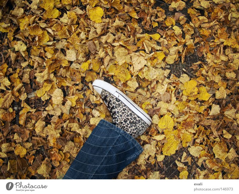 Bittersweet October Autumn Footwear Leaf Loneliness To fall Feet Legs Jeans Lie foot leg shoe trousers leaf leaves