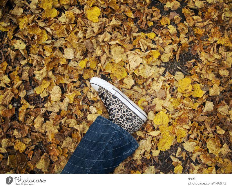 Leaf Loneliness Autumn Feet Footwear Legs Jeans Lie To fall