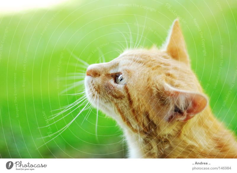 Cat Green Red Eyes Friendliness Nose Pelt Mammal Domestic cat Whisker
